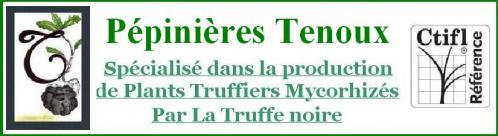 Tenoux2 2