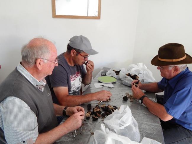 Tri des truffes 2